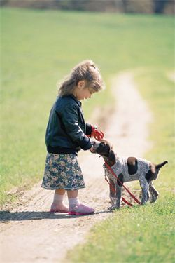 dog training behavior problems obedience