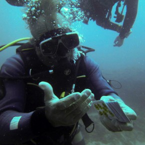 chuchos chachis diving Tenerife