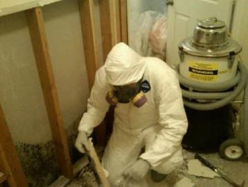 Mold Remediation (Mold Removal)