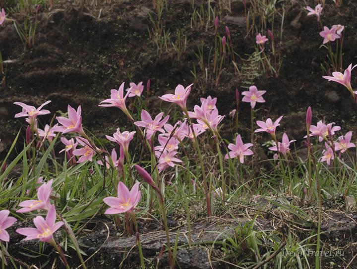Весенние цветы Черапунджи