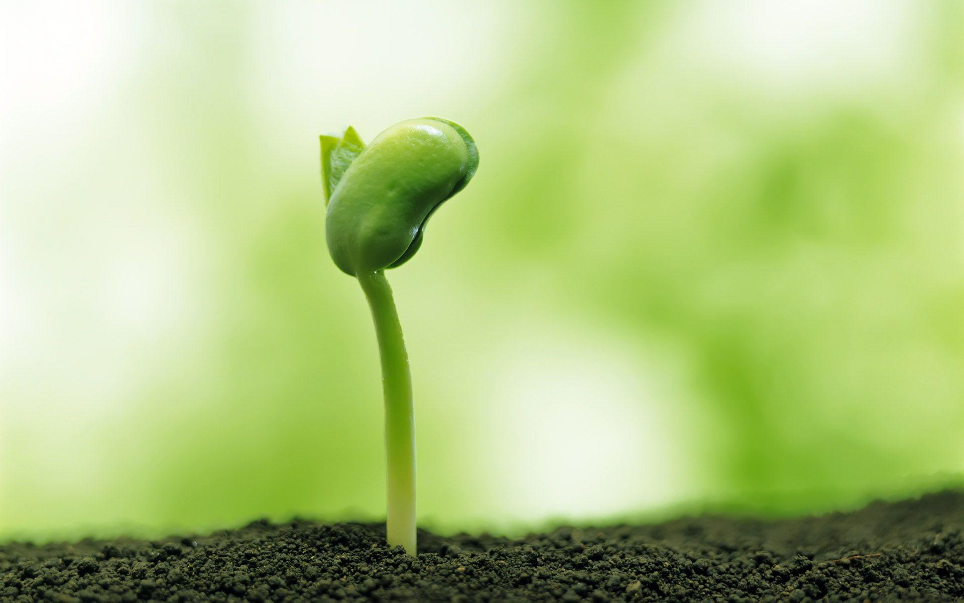 出土的清新绿色嫩芽 背景图片大全