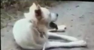 Sangineto (CS): 29 associazioni per ricordare Angelo, il cane impiccato
