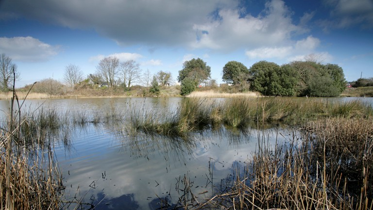 RSPB Brading Marshes nature reserve, Isle of Wight