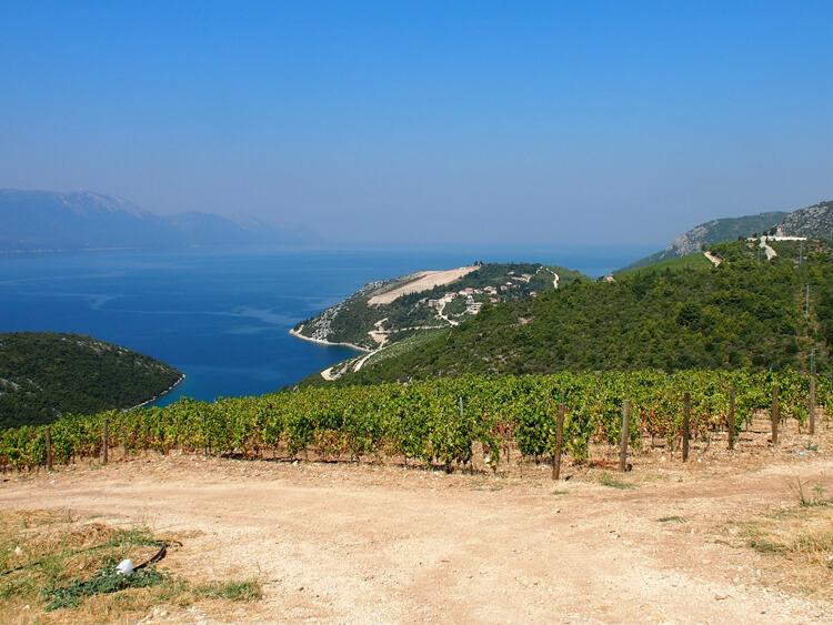 vinograd | Total Croatia