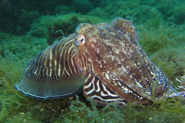 Scuba Diving In Croatia | Total Croatia