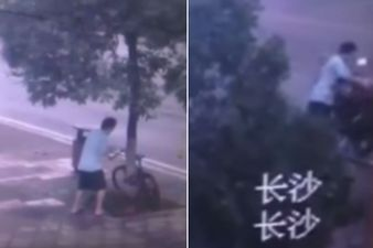 Surveillance camera captures man chopping down tree to steal bike