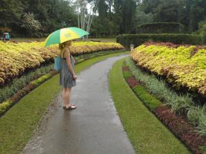sri-lanka-Peradeniya-Royal-Botanical-Gardens-Kandy