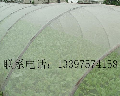湖南大棚种植防虫网