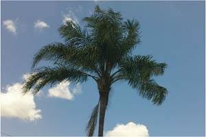 After Palm Tree Fertilization