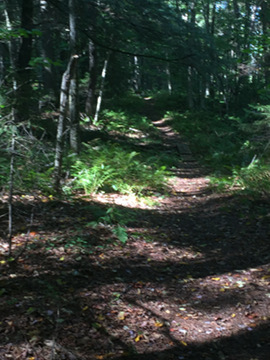 A section of single-track trail meandering through the mixed hardwood forest.