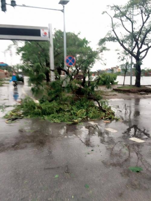 Tin mới nhất cơn bão số 1: Cảnh tan hoang ở các địa phương tâm bão - Ảnh 1