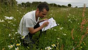 Survey of plant rich field margin, RSPB Hope Farm