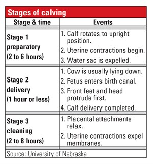 stages of calving table