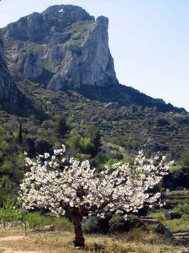 2006_03_25 Cerezo_Sierra de la Foradà_Vall de Gallinera