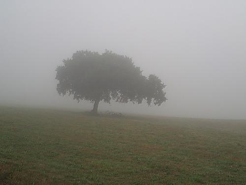 Baum in Nebel