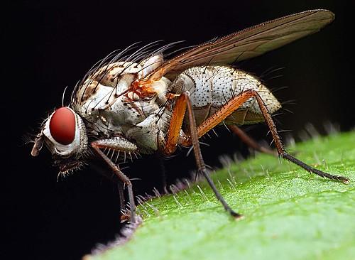 Formidable ser la mosca cojonera ésta.