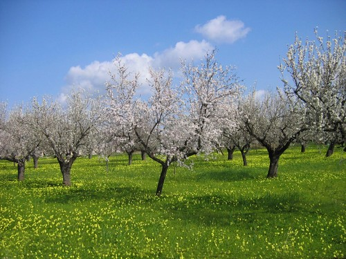Almonds and buttercups