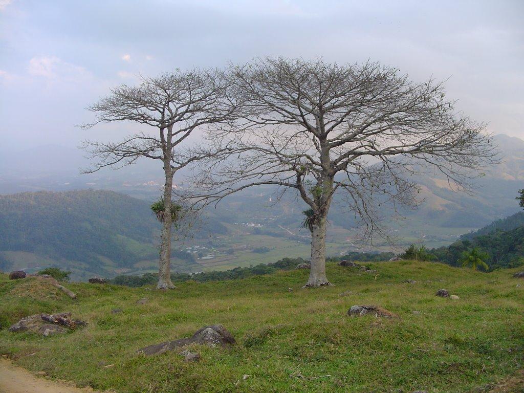 Morro do Arrapongas