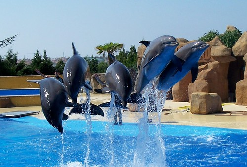 Dolphin show at marineland,Spain.August 2007.