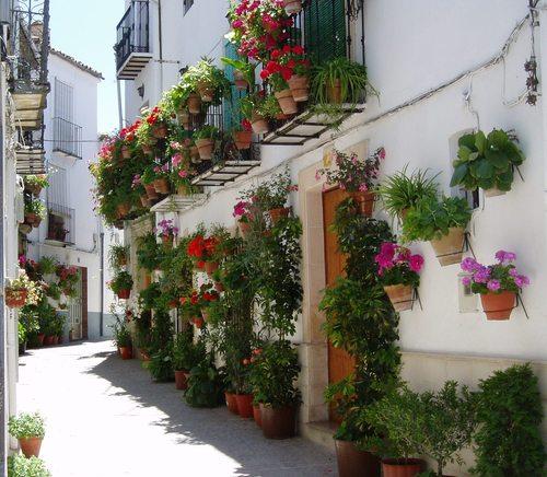 Iznatoraf: Calle floreada