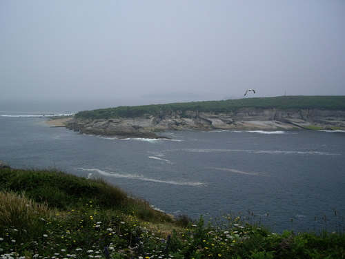 Isla y gaviota (Somo, 14-7-2007)