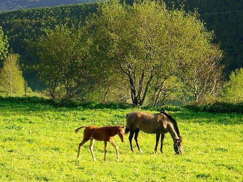 caballos en fonfría