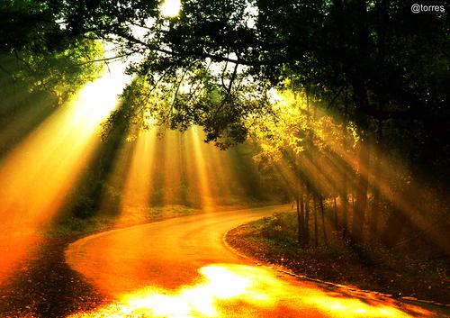 Por el camino verde que va a la ...