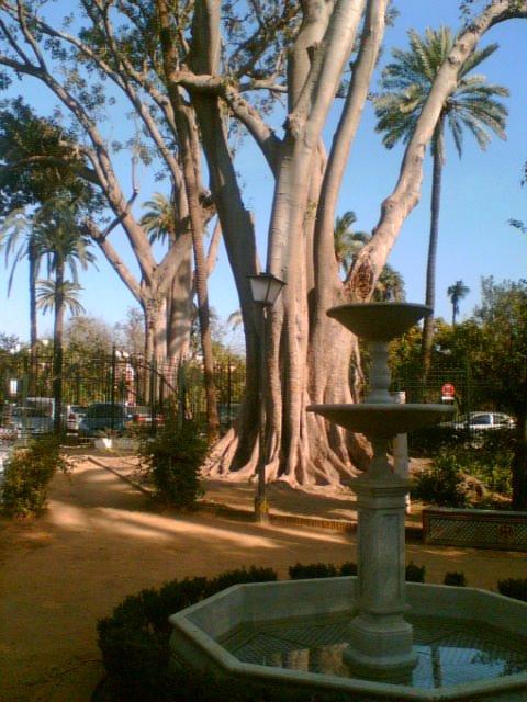 Jardines Murillo 7