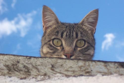 Gato asomándose al patio de la casa de Milagros y Tomás