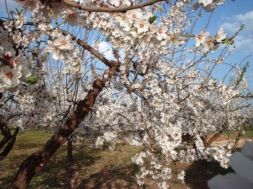 La Primavera a venido...