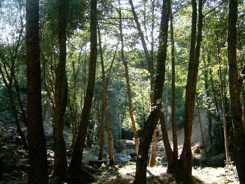 Bosque Portomourisco