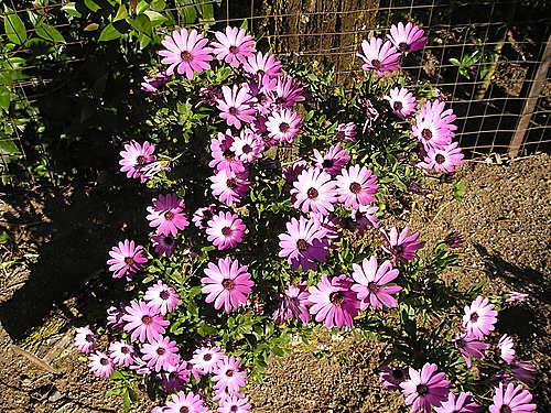 Flores en el camping de Aldeanueva. Mayo de 2004