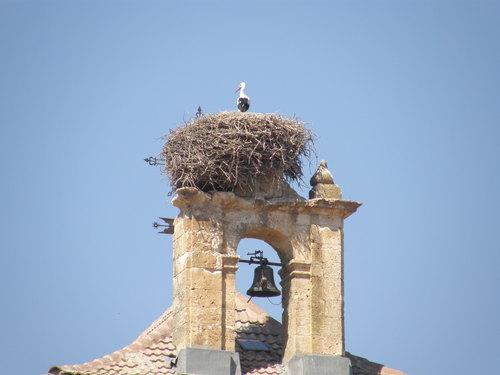 Cigüeña en el campanario de Nava de Roa