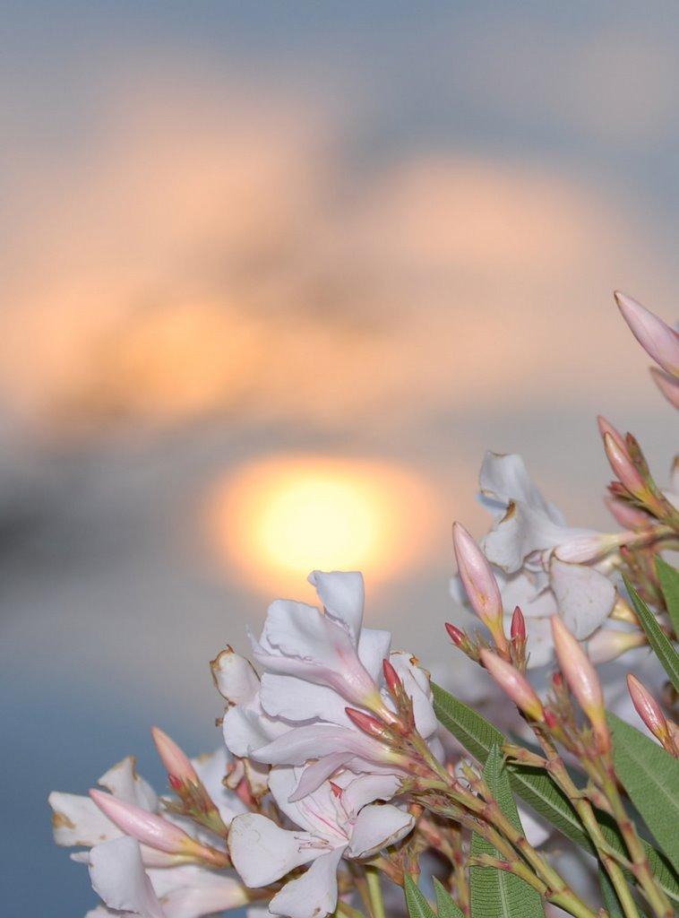 Sunset Finkhof