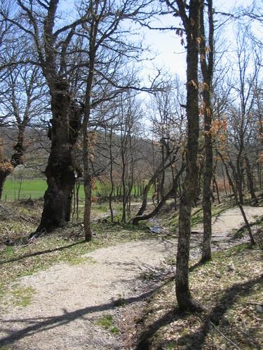 Verdeña - Senda del Bosque Fósil