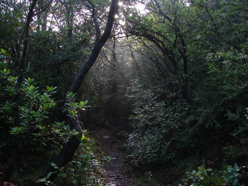 Bosque en Herrera.