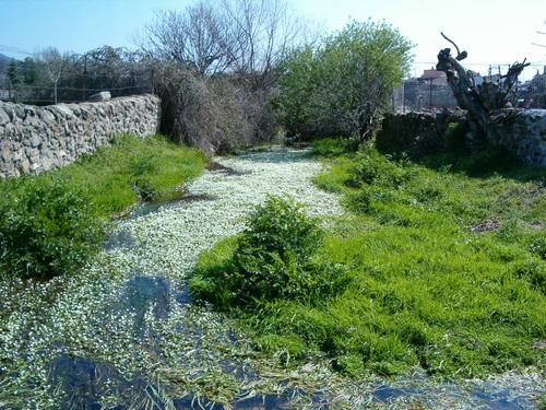 Arroyo Marrupejo