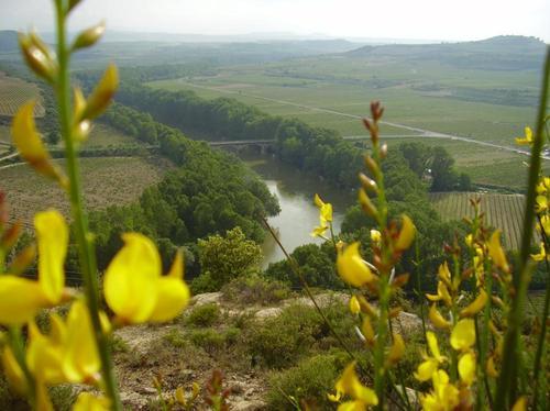 Panoramica desde el Monte Alto Ramo Baños de Ebro - Mañueta www.banosdeebro.com