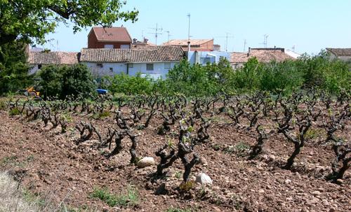 MEDRANO. Entre el Najerilla y el Iregua (La Rioja). Abril-2006.