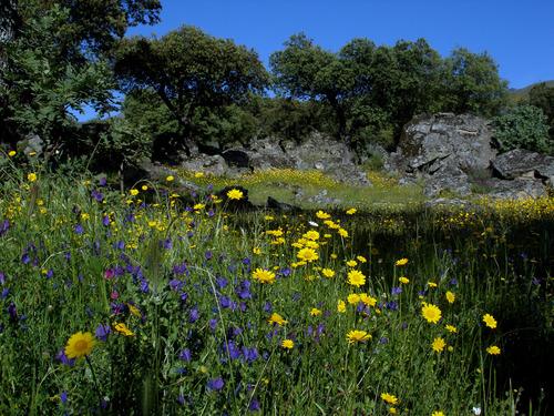 En Primavera, Flores y Rocas. Típico en Jarilla.