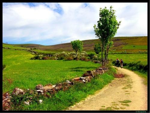 Subiendo a O Cebreiro - Camino de Santiago