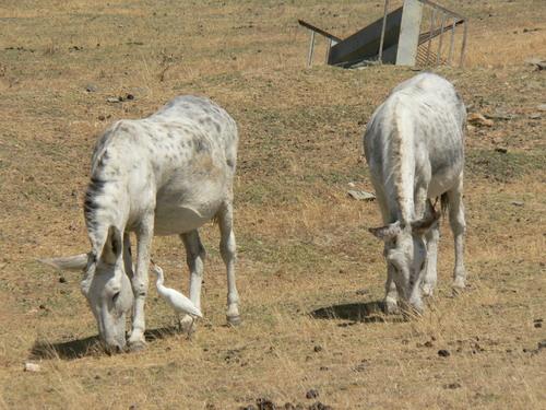 Pueblo de campo Lugar y sus burros..