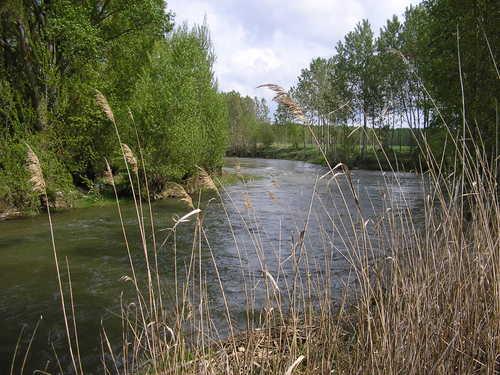 Ribera en Villodrigo