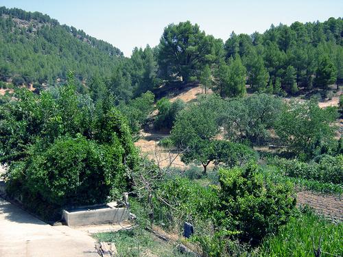 Arroyo Madera - Arguellite