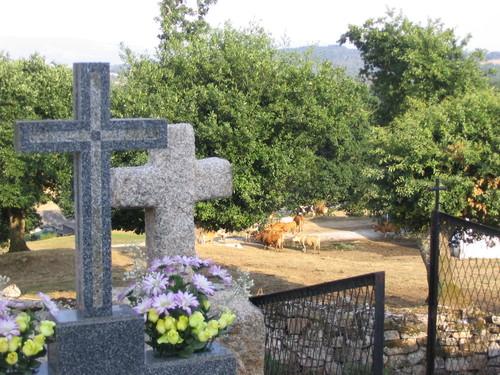 La paz bovina de los cementerios