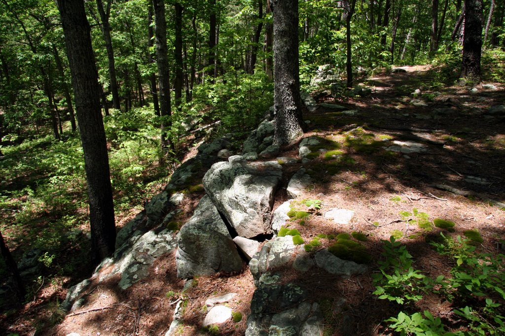 Along White Oaks Trail