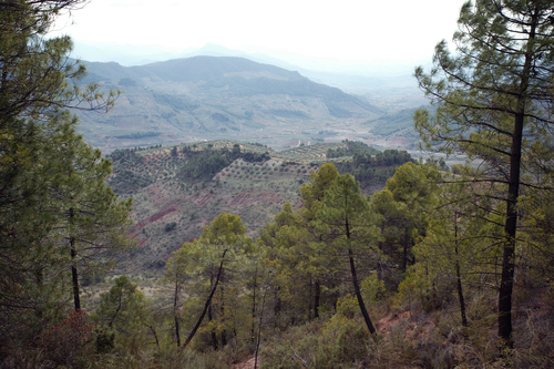 Villarrodrigo - Bosques