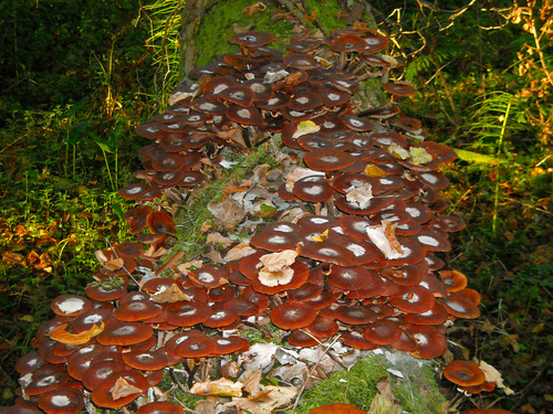 """A lot of Mushrooms in the """"Pozo Tremeo"""", Cantabria, Spain"""