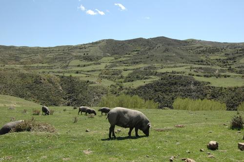 Cerdo ibérico en La Rioja