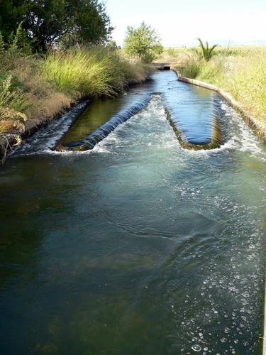 Pico pato de engorde del arroz, Secundario del Canal de Orellana.